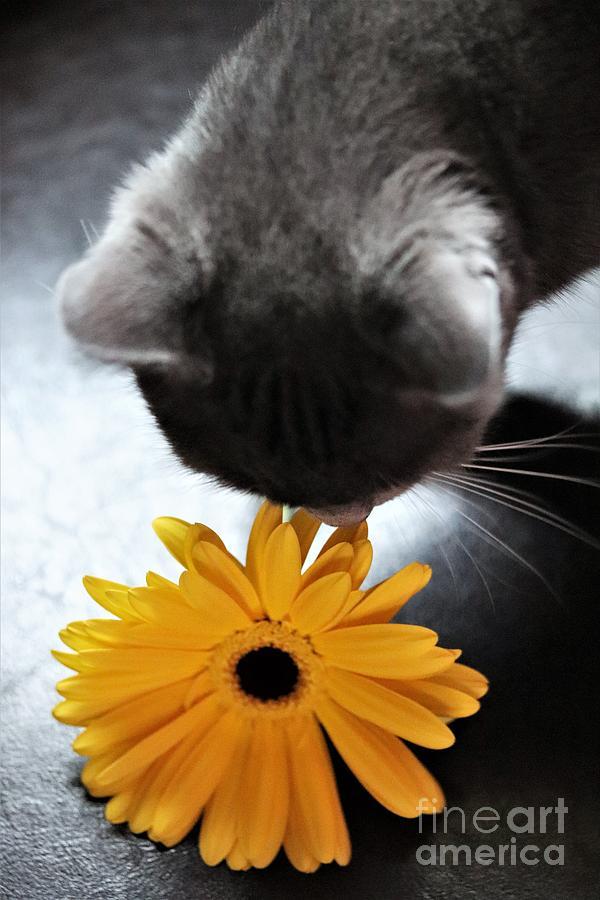 Daisy Photograph - Kitten And The Daisy  by Mesa Teresita