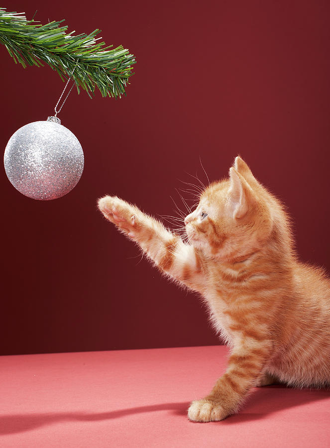Kitten Playing With Christmas Bauble On Photograph by Martin Poole