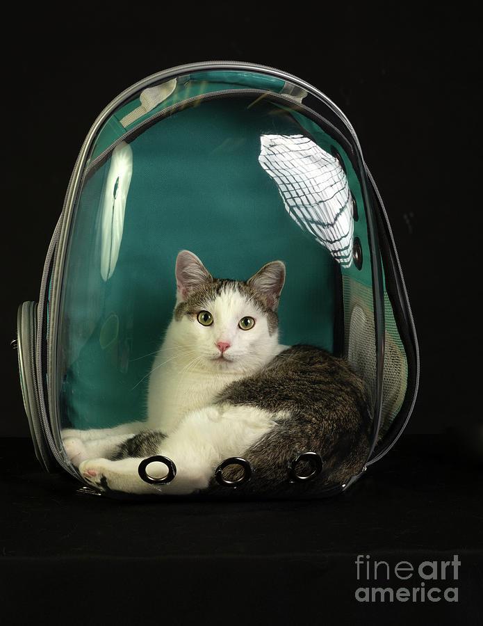 Kitty in a Bubble by Susan Warren