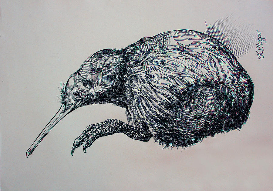 Kiwi sketch by Derrick Higgins