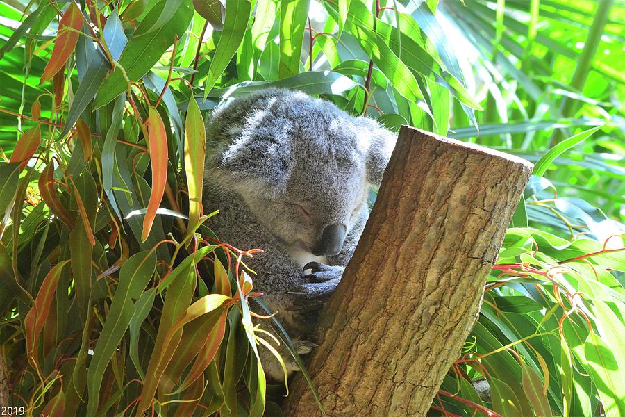 Koala Bear Prayers by Lisa Wooten