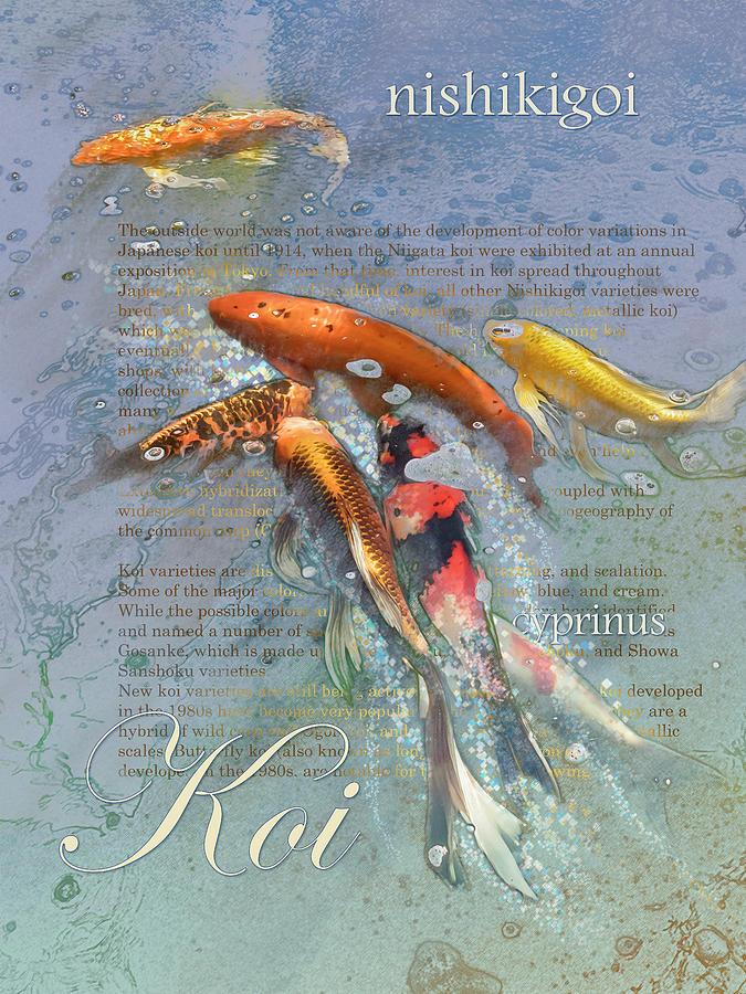 Koi Graphic by Mark Mille