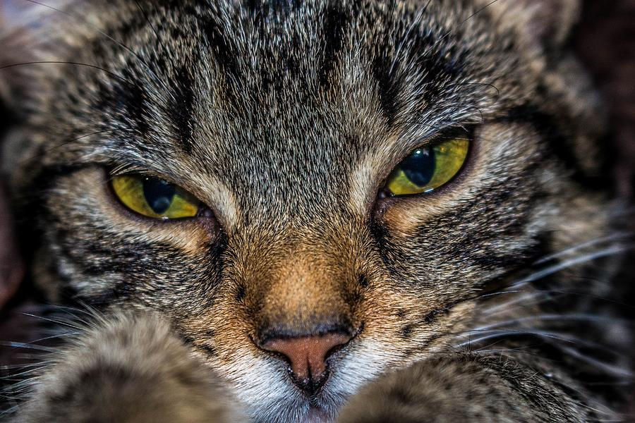 Cat Photograph - Kona Bella by TLB Creations