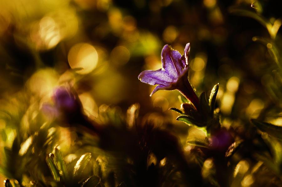 La Primavera by Fabien Bravin