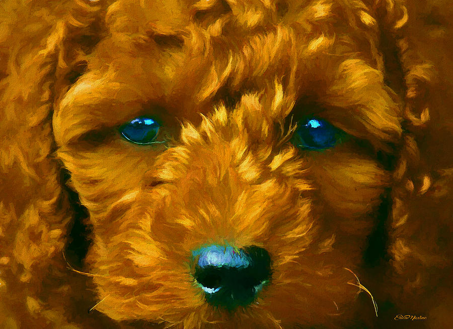 Labradoodle 767 - Painted by Ericamaxine Price