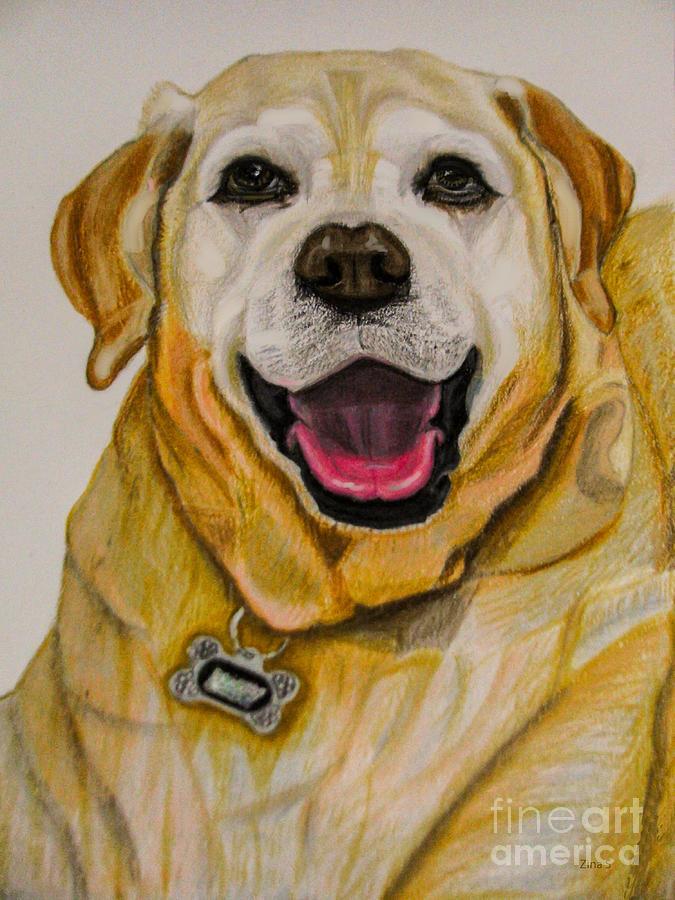 Labrador Drawing - Labrador Retriever Drawing by Zina Stromberg