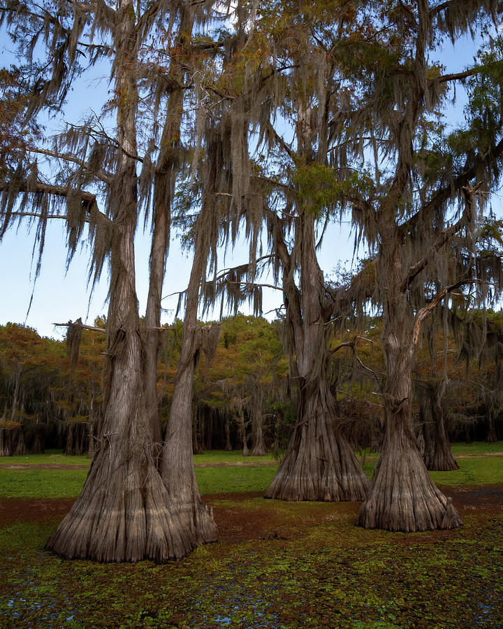 Lac Caddo by Lana Trussell