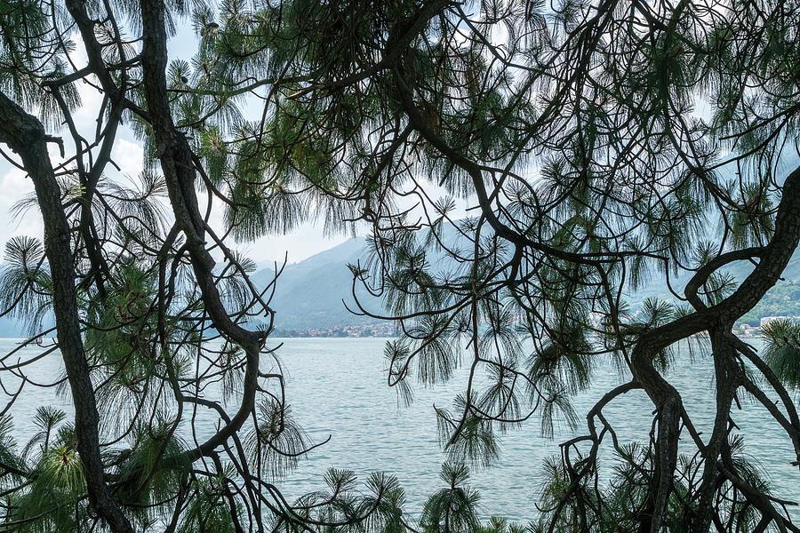 Lacy Pine Screen - Splendid Lake Como in Lombardy Italy by Georgia Mizuleva