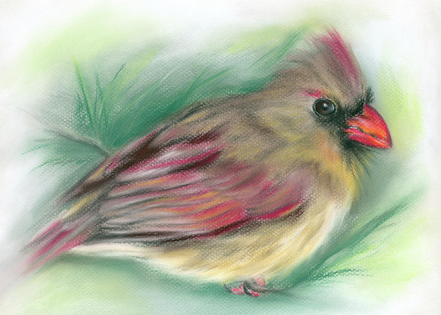 Lady Cardinal in the Pine by MM Anderson
