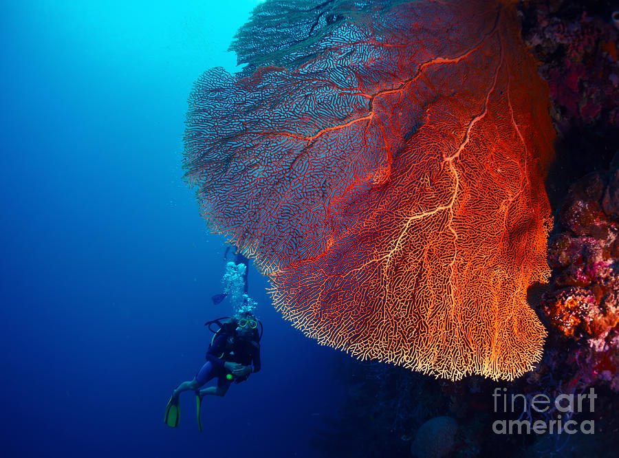 Big Photograph - Lady Diver Exploring Tropical Bright by Dudarev Mikhail