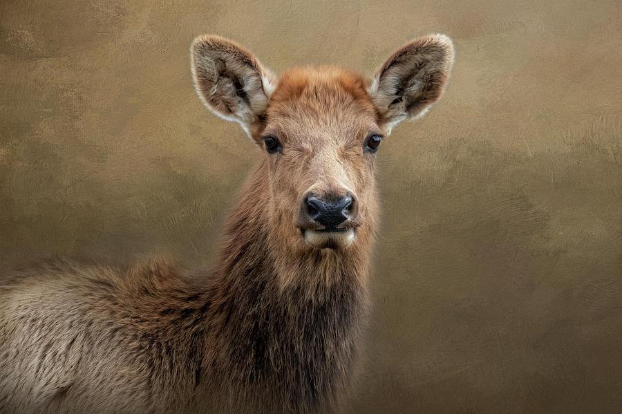 Lady Elk by Kelley Parker