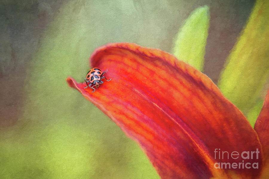 Ladybug On Orange Lily by Sharon McConnell
