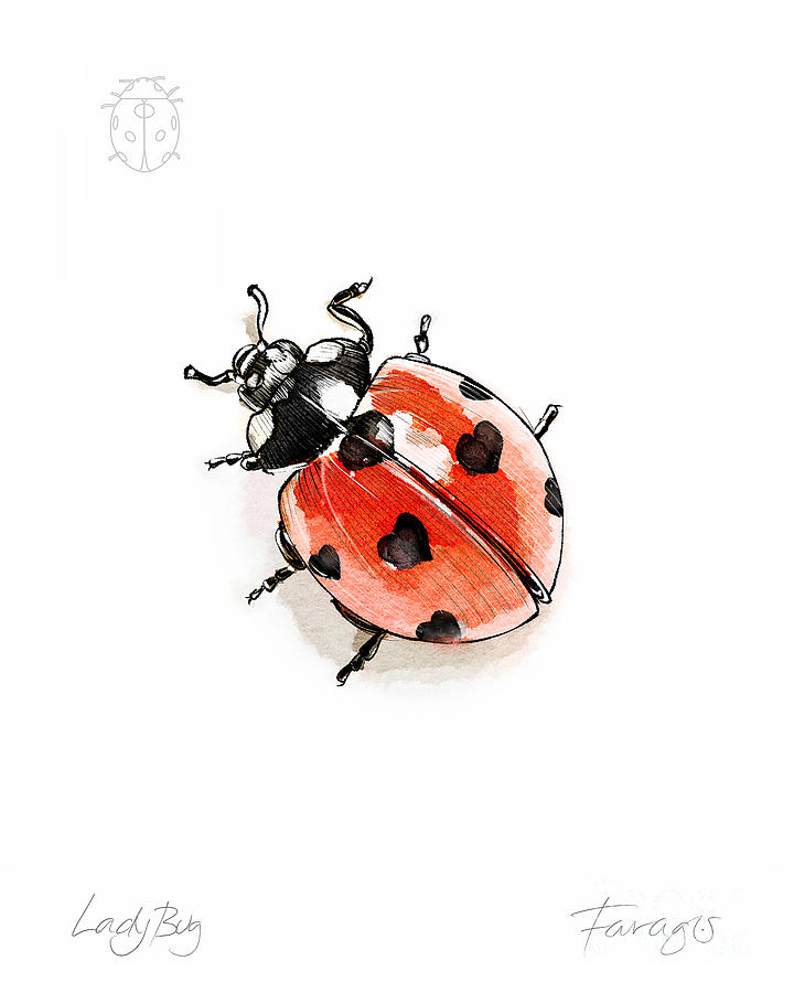 Ladybug Drawing - LadyBug by Peter Farago