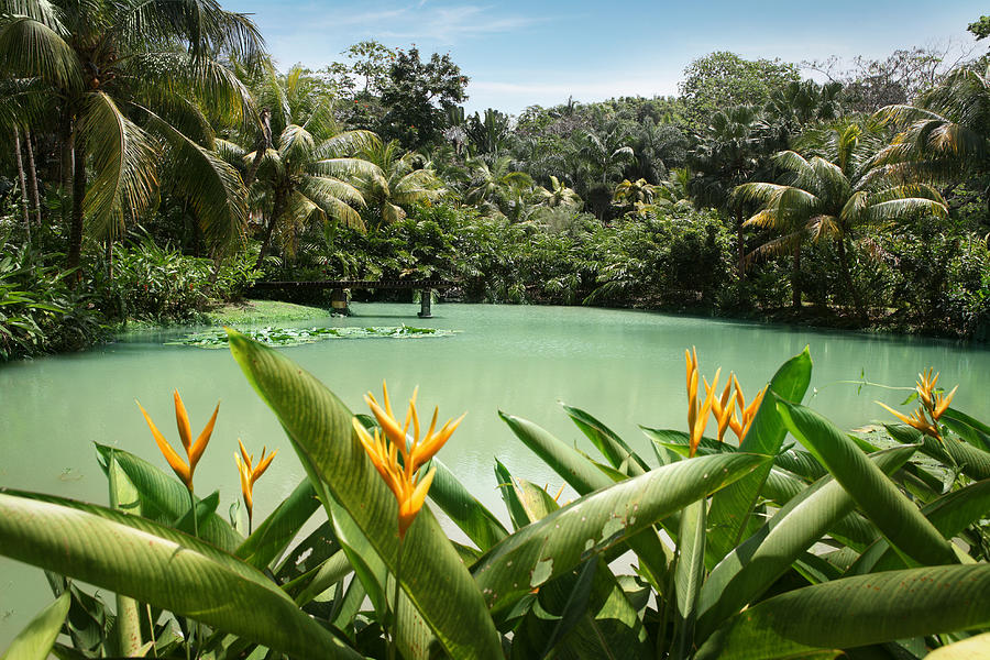 Lagoon At Cranbrook Flower Forest Photograph by Narvikk