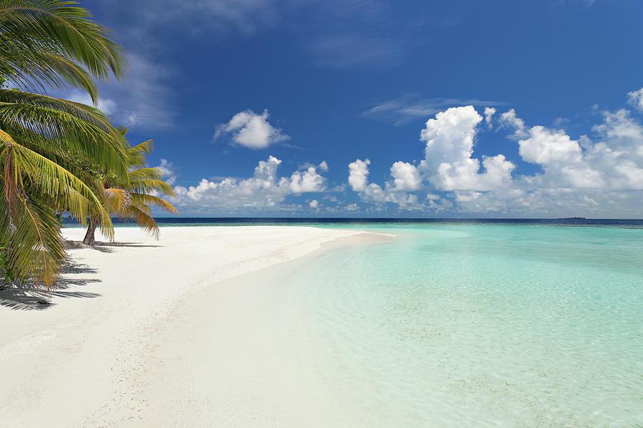 Lagoon Beach Palmtree Photograph by Amriphoto