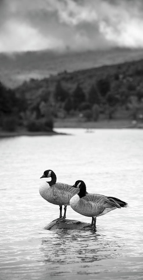 San Diego Photograph - Lake Cuyamaca Geese by William Dunigan