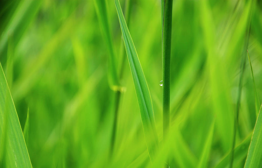 Lake Grass Raindrop 2 Photograph