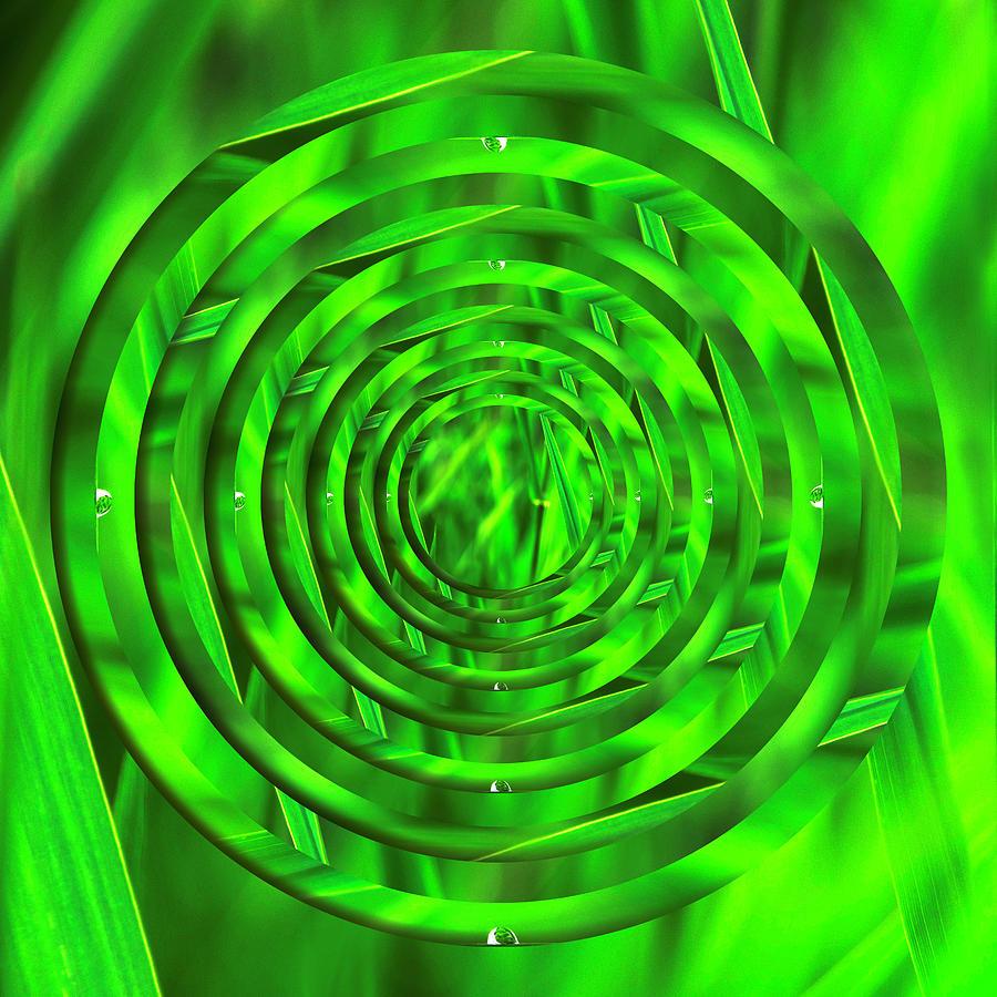 Lake Grass Raindrop Circles 2 by Pelo Blanco Photo
