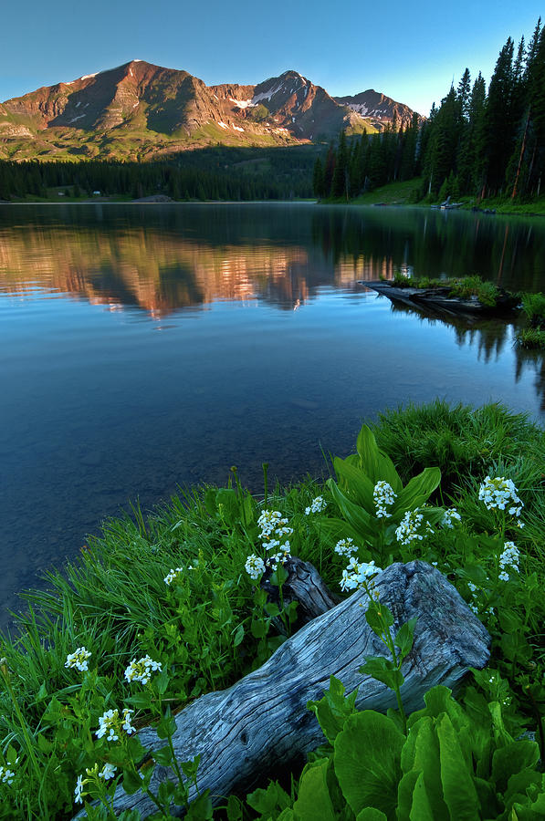 Tranquility Photograph - Lake Irwin Wildflowers by Mike Berenson / Colorado Captures