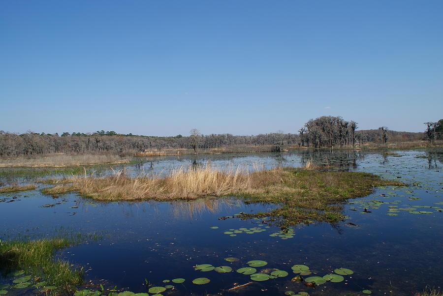Lake Lafayette by Stephanie Pieczynski