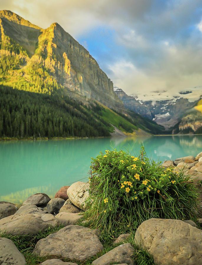 Lake Louise Flowers by Dan Sproul