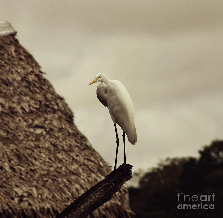Lake Marasha Egret Photograph