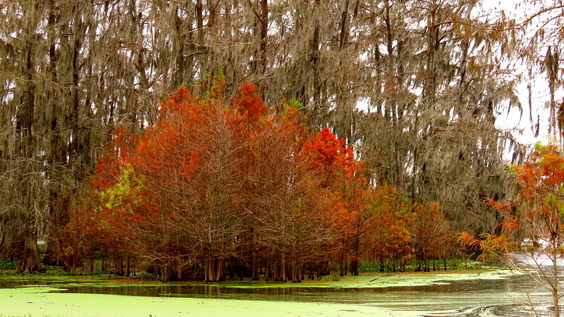 Lake Martin Colors by Betty Berard