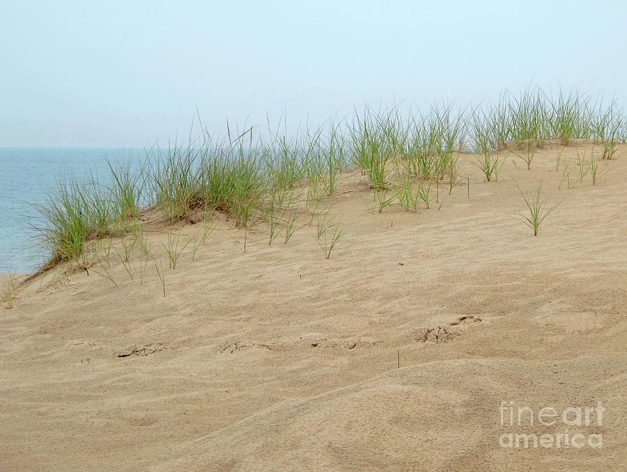 Lake Michigan Sand Dune by Ann Horn