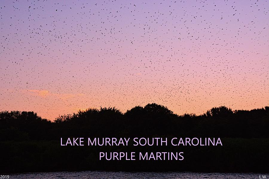 Lake Murray South Carolina Purple Martins by Lisa Wooten