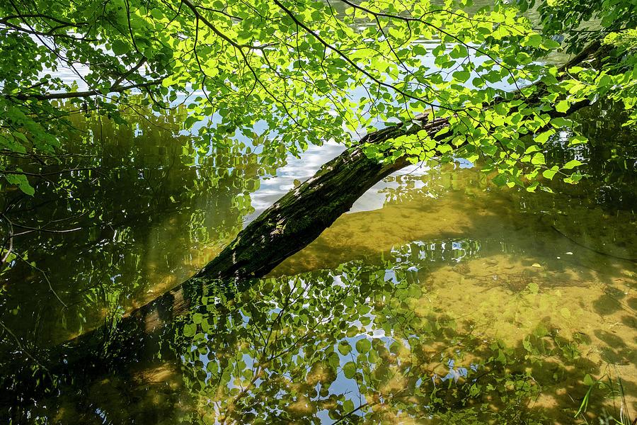 Lake near Sweita Lipka, Northern Poland by Dubi Roman