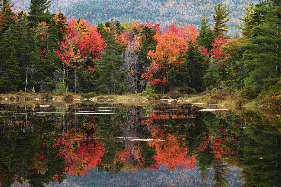 Lake Perfectly Reflects Powerful Fall Photograph by Ilia Shalamaev Wwwfocuswildlifecom