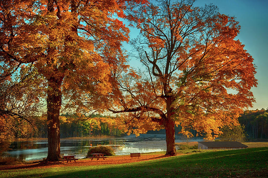 Lakeside Autumn Foliage by Joann Vitali
