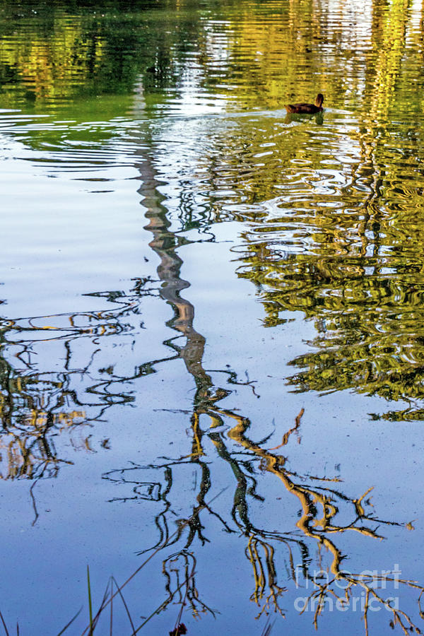 Lakeside Reflections II by Kate Brown