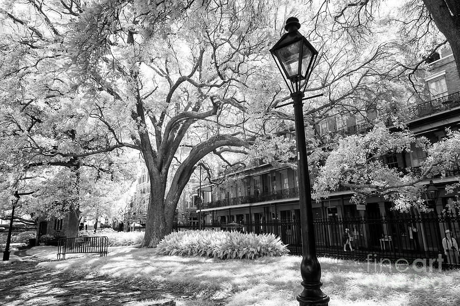 Lamp Post In Jackson Square New Orleans Infrared By John Rizzuto