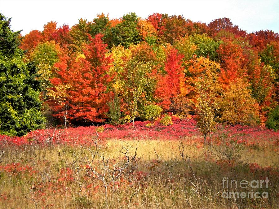 Landscapes LF98 by Monica C Stovall