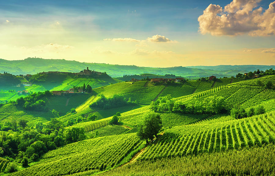 Langhe Vineyards View, Castiglione Falletto And La Morra, Piedmo
