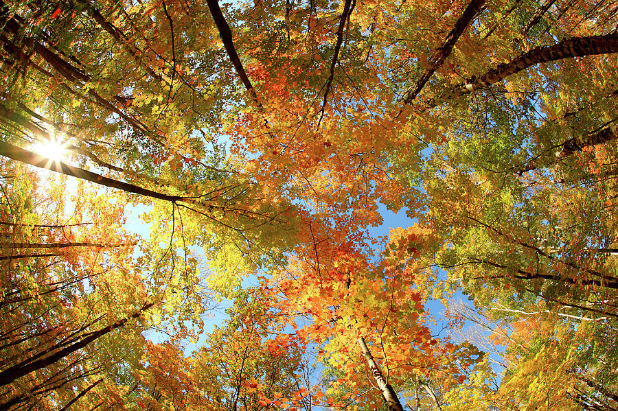 Canopy Photograph - Langlade County Canopy by Todd Klassy