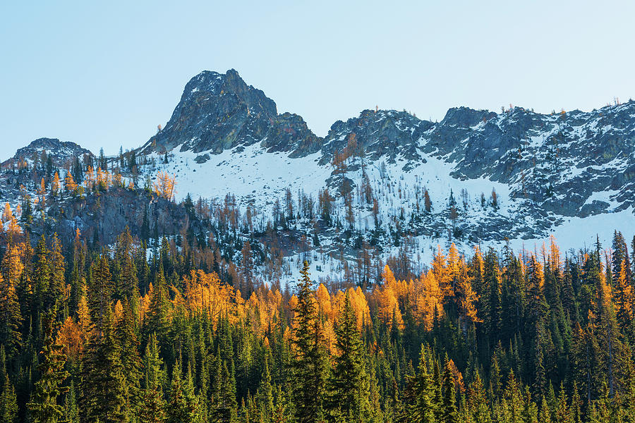 Larch in North Cascade by Michael Lee