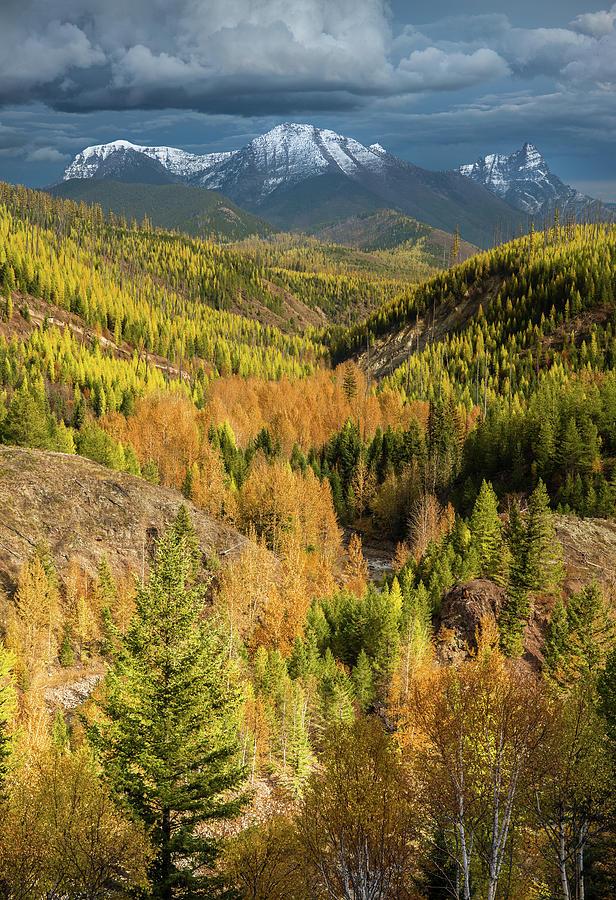 Larch Season / Flathead River, Glacier National Park  by Nicholas Parker