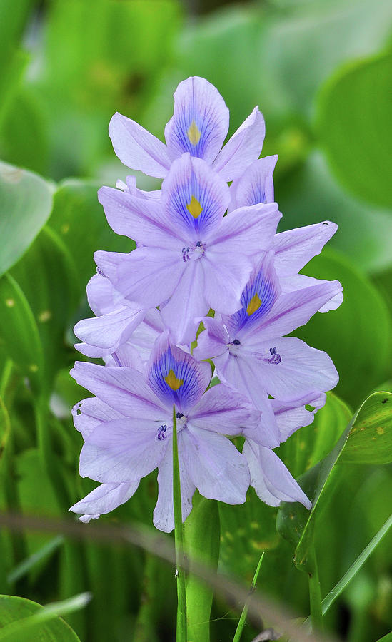 Large purple flowers by Gene Bollig