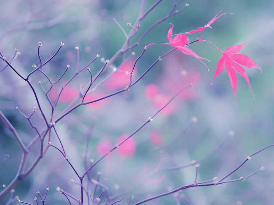 Artwork Photograph - Last Beauties by Joan Han