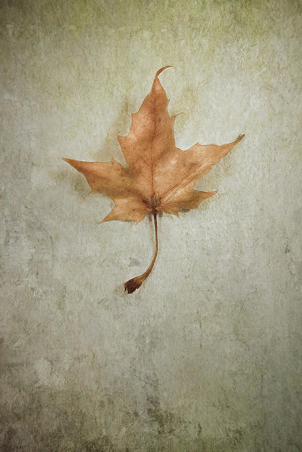 Leaf Photograph - Last Days by Scott Norris
