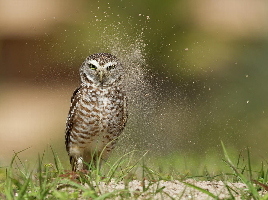 Owl Photograph - Last Light At The Nest !! by Alfred Forns