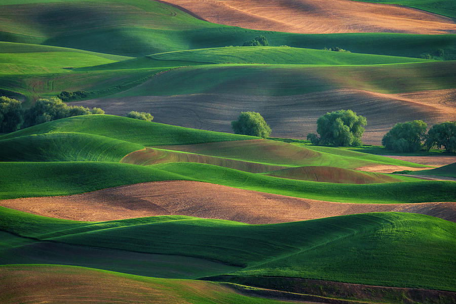 Late Afternoon in the Palouse by Kristen Wilkinson