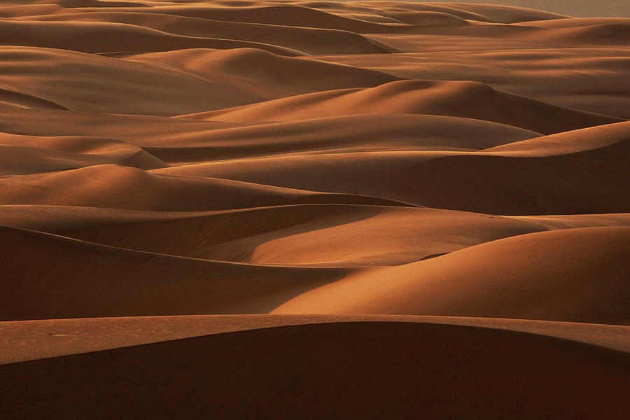 Late Afternoon Light On The Sand Dunes Photograph by Mint Images - Art Wolfe