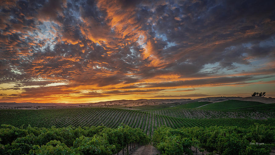 Paso Robles Photograph - Late August Sky, Paso Robles Wine Country by Tim Bryan