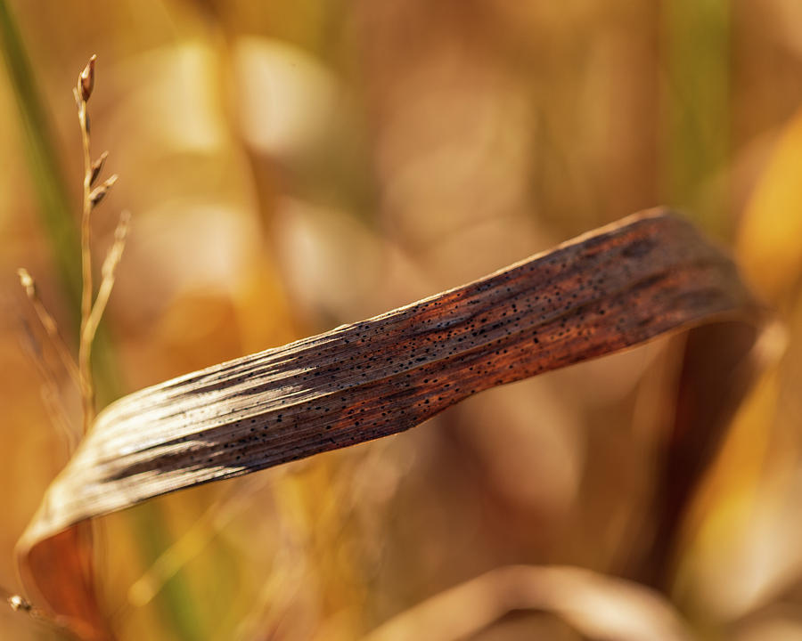 Late Autumn Grasses by Amelia Pearn