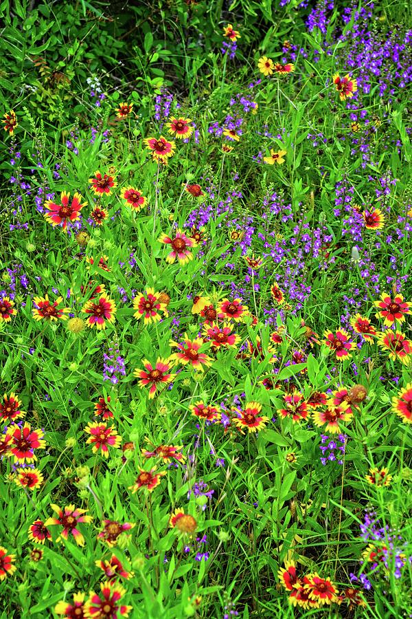 Late Spring Bloomers In The Hill Country Vertical Photograph By