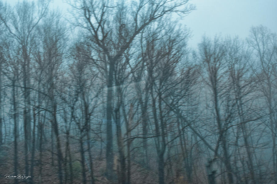Late Winter Trees - Sapphire NC by Paulette B Wright