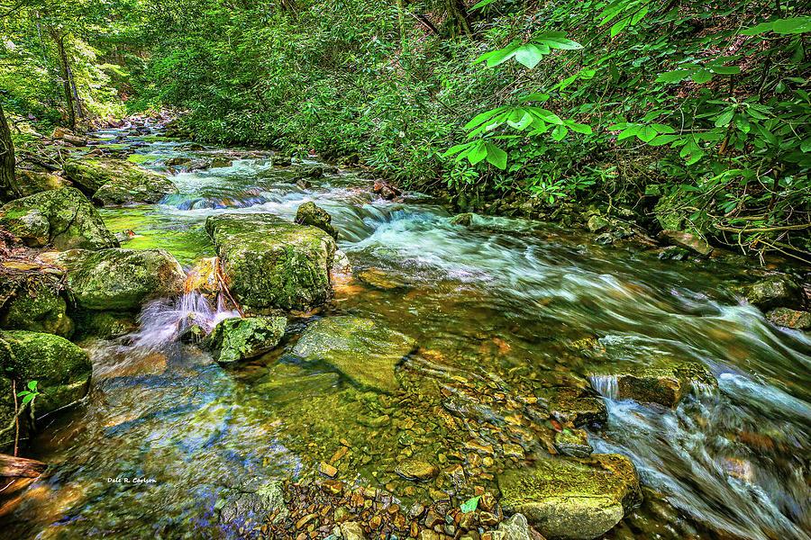 Laurel Creek Cool by Dale R Carlson